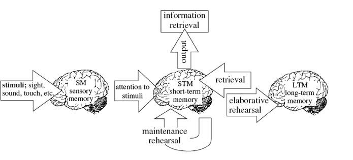 Neuro enhancing supplements